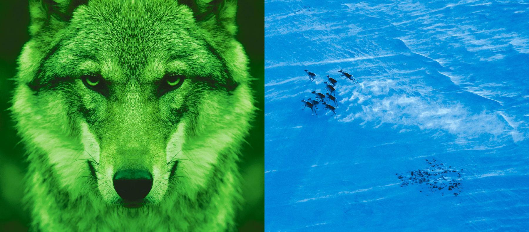 Wirtschaftskanzlei Nürnberg Header Wolf Herde